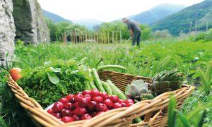 Ο νέος ευρωπαϊκός Κανονισμός για τη βιολογική γεωργία